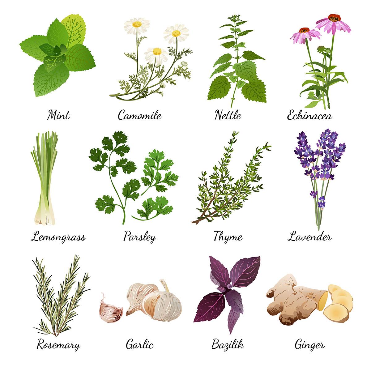 Garden Spices